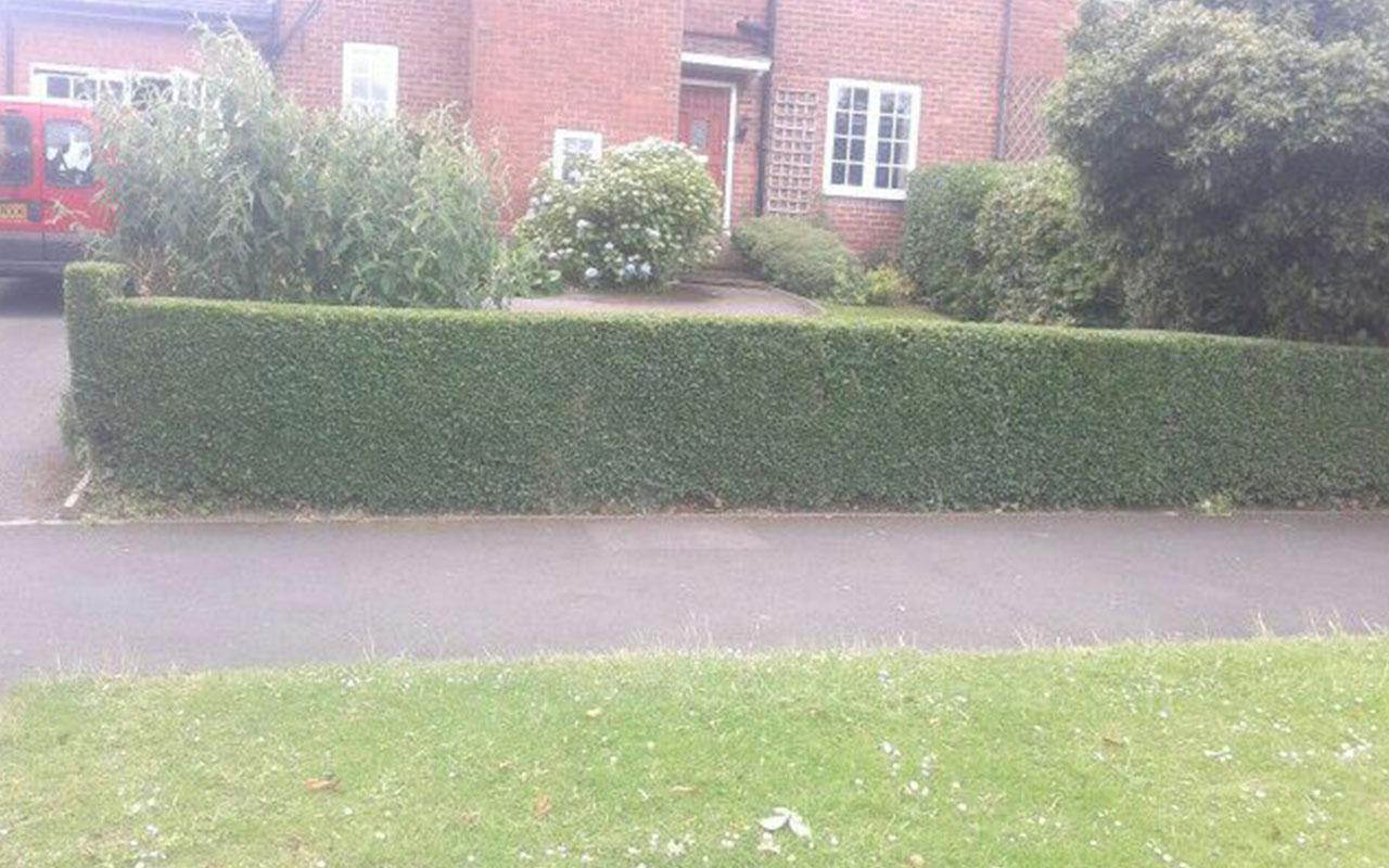 hedges-1